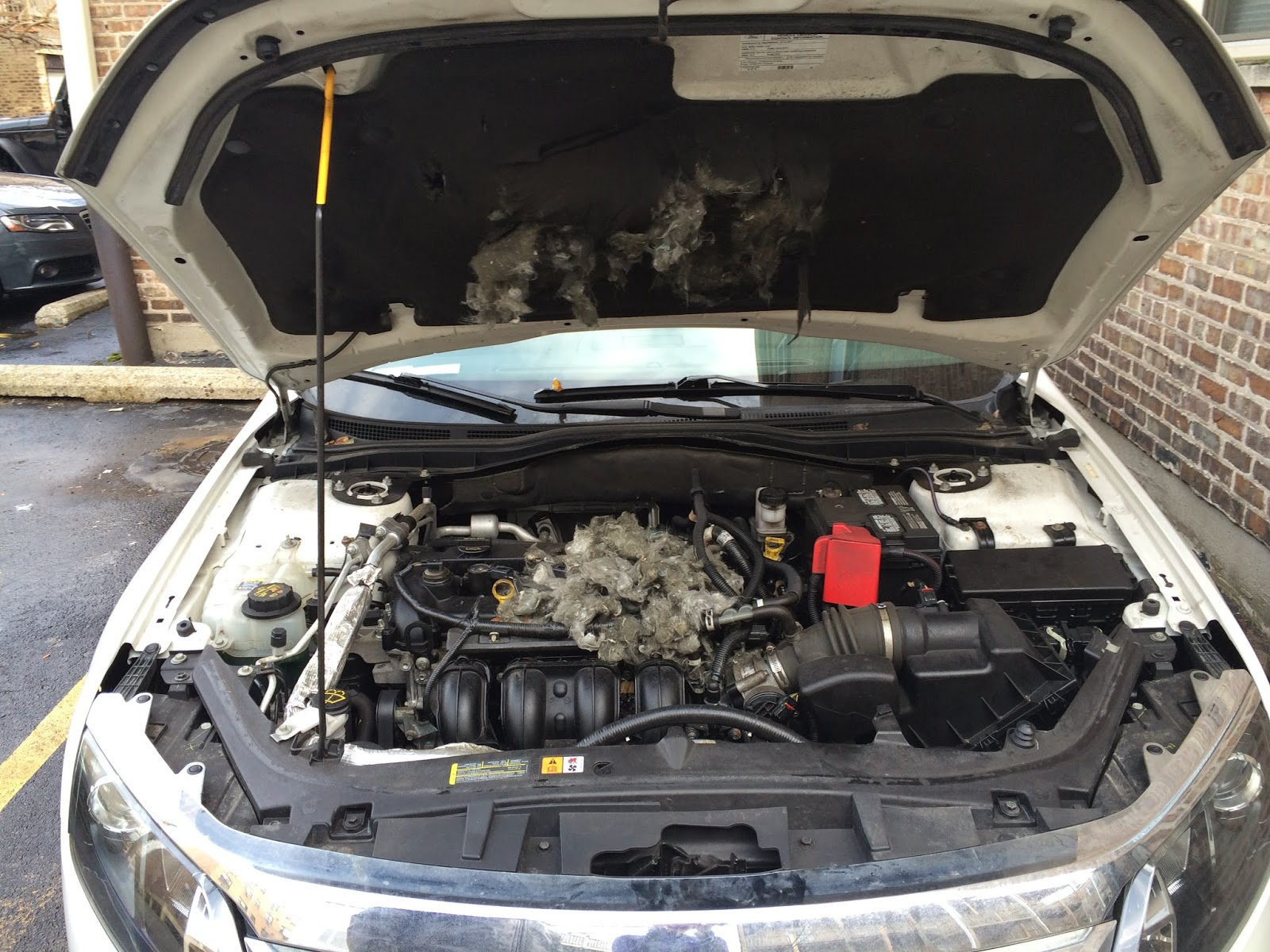 How To Get Rid Of Squirrel Nest In Your Car